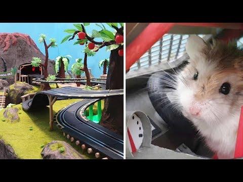 MAJOR HAMSTER vs CAT dr. MAX 1: VOLCANO JUNGLE RACE