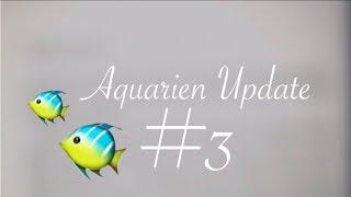 Aquarium Update 3 | Sylvie Angelique