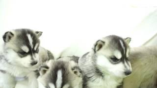 小型犬・中型犬・大型犬をたくさんのペットを取り扱うペットショップ ワ...