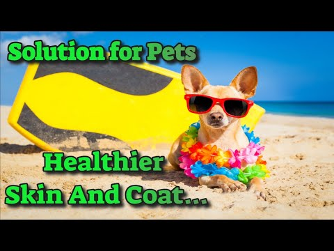 Fish Oil Supplement For Dogs To Help Condition Coats...