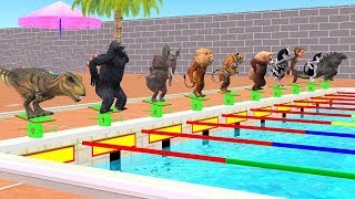 Wild Animals Swimming Race Cartoons For Children - Animals Indoor Playground Videos For Kids Songs