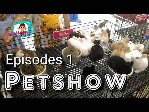 Petshow : The Mall Shopping Center Bangkapi Thailand : Melis Tv