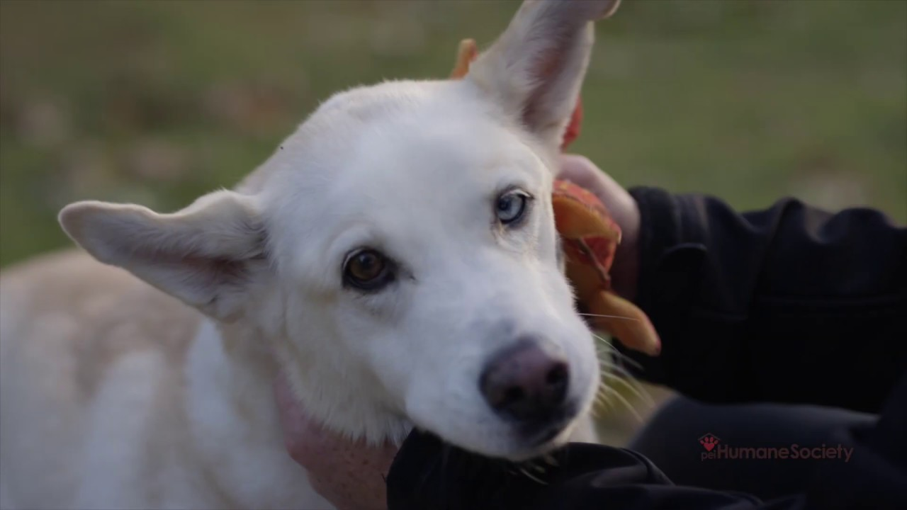 PEI Humane Society | Prince Edward Island