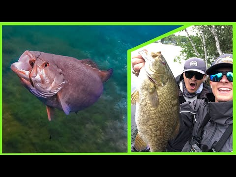 This River Is LOADED With GIANT BASS (St. Lawrence River)