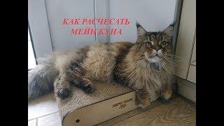 УХОД ЗА ШЕРСТЬЮ МЕЙН КУНА 😻 Как правильно расчесывать кота Кот Мейн Кун Main Coon Cats