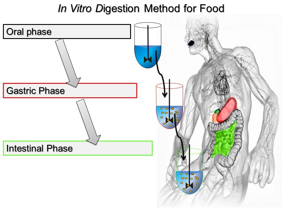 Static In Vitro Digestion Method For Food  2014 Minekus Et