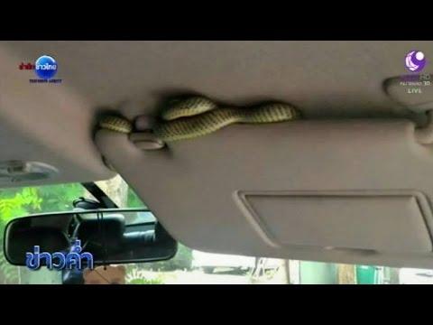 ชัวร์ก่อนแชร์ : งูเข้ารถ | สำนักข่าวไทย อสมท