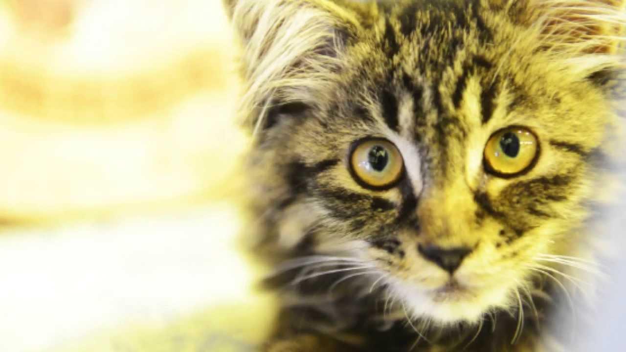 喵星球CatsplanetHK宣傳視頻第一彈 - YouTube