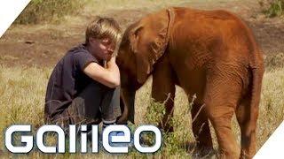 Dieser Elefant tröstet einen Menschen: Können Tiere lieben wie Menschen? | Galileo | ProSieben
