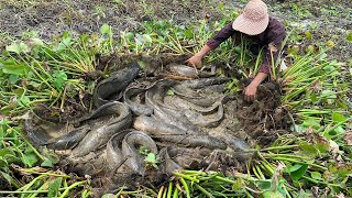 Wow!! Catching Very Big Fishes by Hand in Raining Season - Best Fishing of 2021