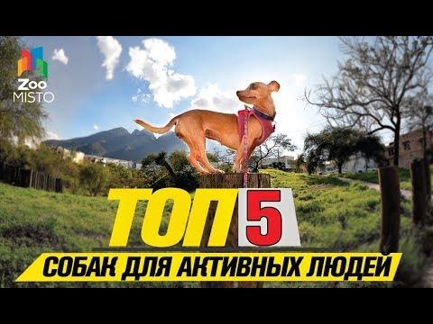 Топ 5 собак небольших размеров для активных людей   Top 5 small dogs for active people