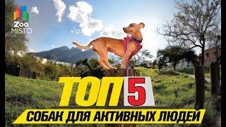 Топ 5 собак небольших размеров для активных людей | Top 5 small dogs for active people