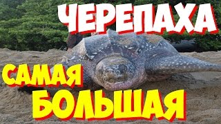 САМЫЕ САМЫЕ большие черепахи мира | Какая самая большая в мире черепаха?