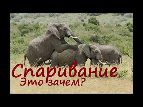 Спаривание слонов и носорогов. ПРО.