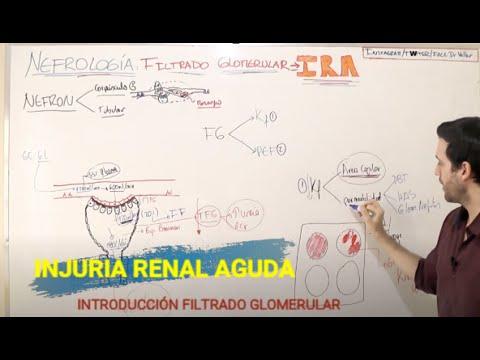 insuficiencia-injuria-renal-aguda-introducciÓn:-filtrado-glomerular