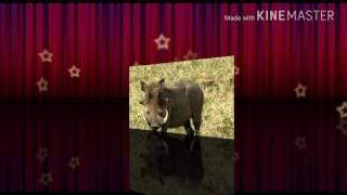 Zwierzęta odc1