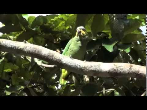 The Spirit of the Rainforest - Beautiful Jungle [Hd]