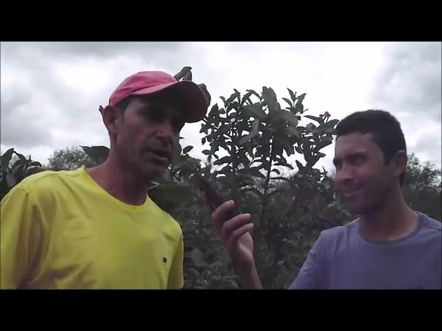 Arquivo Alto Sertão: Agricultor da região de Cajazeiras é exemplo de superação no plantio de frutas