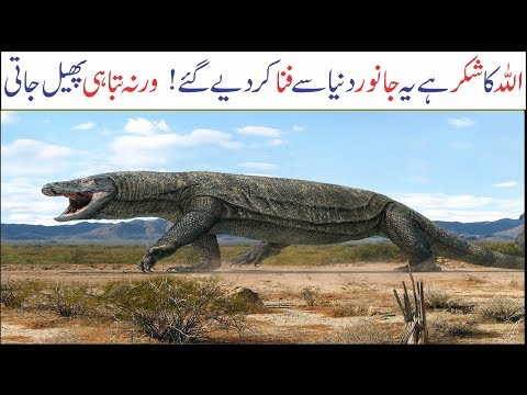 5 Biggest Animals Of Ancient Times   Asif Ali TV