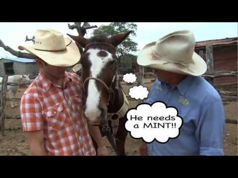 Joe Gumm & family, Traveling With The Tribe: Twin Elm Dude Ranch Bandera, TX