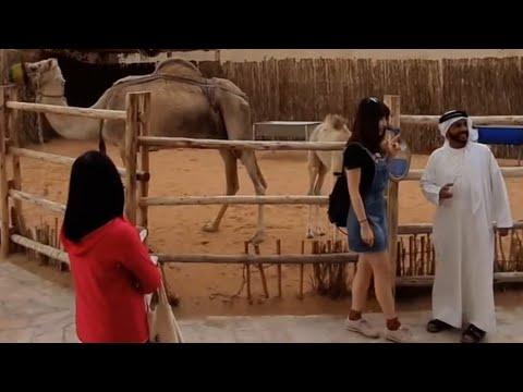 Arabian Traditional Animal Camel In Bastakiya Dubai Heritage Site جمل في موقع البستكية دبي للتراث