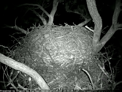 Big Bear Bald Eagle Cam