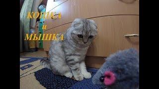 😻 Игра в Кошки - Мышки 🐱 Смешной и Милый Котенок Хлоя играет с мышкой