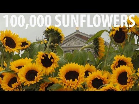 Sunflowers Come Alive! @ Van Gogh Amsterdam
