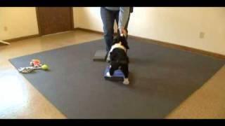 Platform Training For Dog Sports