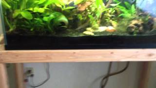 Double 90 Gallon Fish Tank Stand