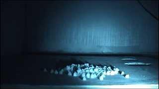 Завелась дома мышь.(, 2014-04-09T18:22:57.000Z)