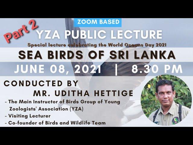 Sea Birds of Sri Lanka - Part 2