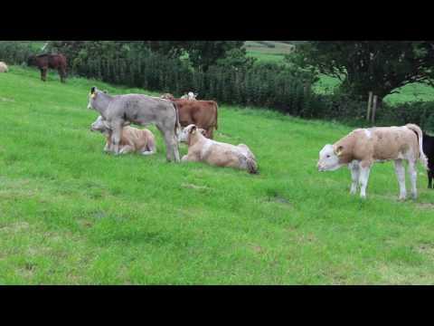BETTER farm NI - Declan Rafferty and Aidan Quinn