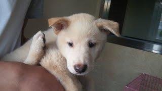 幸运 lucky dog rescued from yulin dog meat festival is adopted