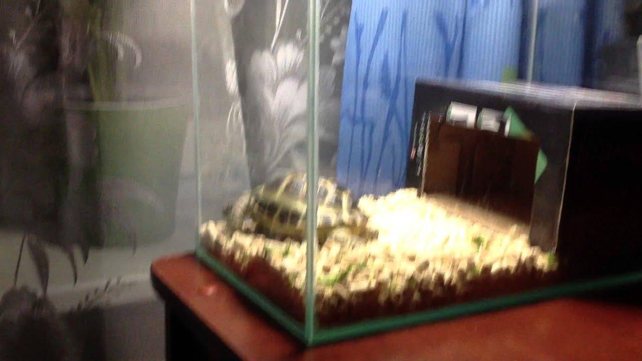 Купили мне по моей просьбе эту сухопутную черепаху, когда мне было 5 лет за 25 рублей. Мы пришли на квартиру к женщине, у нее в маленькой пластиковой коробке сидели две черепахи самка и самец. Самка была зеленоватая и мне не понравилась, поэтому я решил взять себе самца. По размеру в.
