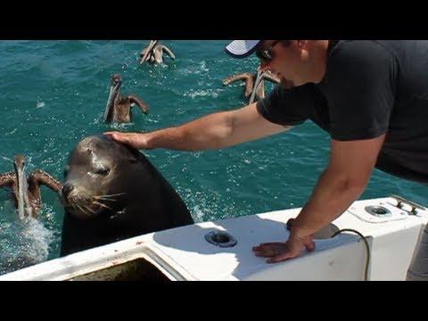 Cute Sea Lion Catching A Ride