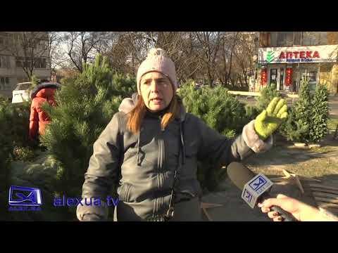 Телеканал ALEX UA - Новости: В Запоріжжі вже почали торгувати різдвяними ялинками