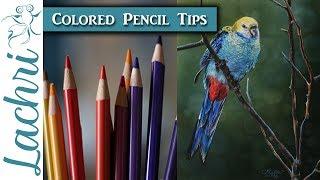 Bird in Colored Pencil tutorial + paper review - Lachri