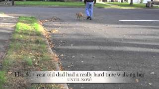 Escaping Rescue Dog Off Leash Heeling And Placing