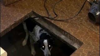 В красноярском приюте для животных нашли мертвых и обезображенных собак