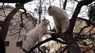 仲の悪い姉妹・重量級のウメコVS軽業のアネゴ 公園雌猫最強のウメコには...