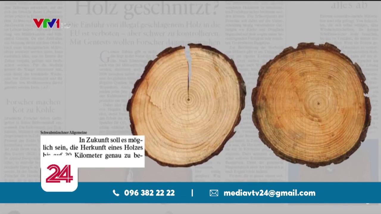 EU cứ chống, buôn lậu gỗ ở EU cứ tràn lan | VTV24