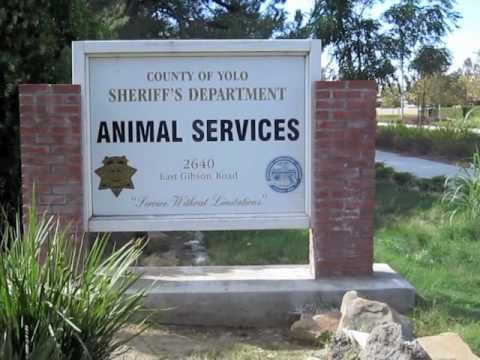 Tour of the Yolo County Animal Services