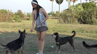 Amazing Smart dogs playing with Lady at Garden   how to play with cute dogs and lady #17