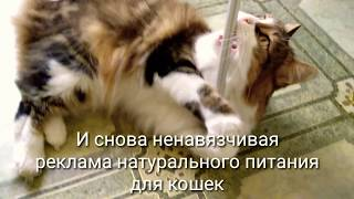 Кошачий корм своими руками: основные ингредиенты