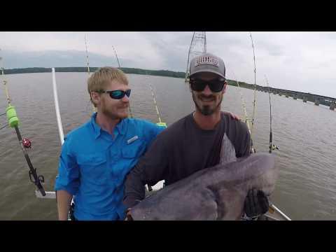 Giant Catfish Kerr Lake 73 Lbs 2019