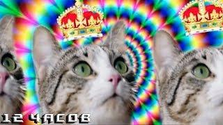 12 Часов — Секрет Энергии — Kitekat® (feat. Кот Борис)