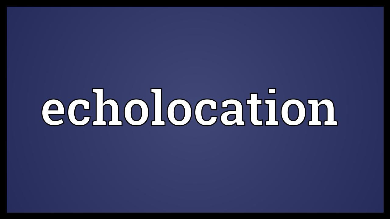 Echolocation Meaning