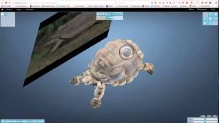 Smoothie 3D process, Giant Tortoise