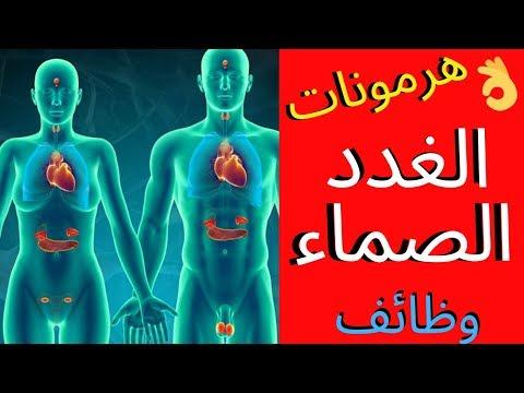 ماهى الغدد الصماء وهرموناتها ووظائفها ؟بأسلوب سهل وبسيطendocrine glands